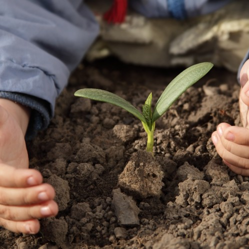 Child hands, tending a new plant